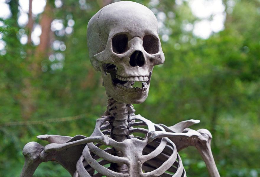 human bones names